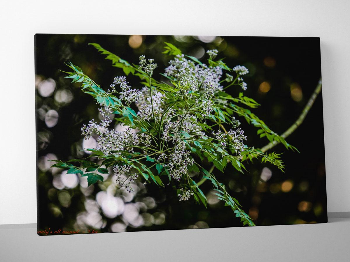 Nhành hoa đẹp