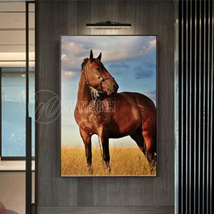 Ngựa trên đồng cỏ
