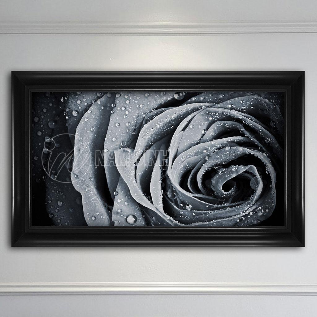 Bông hoa hồng
