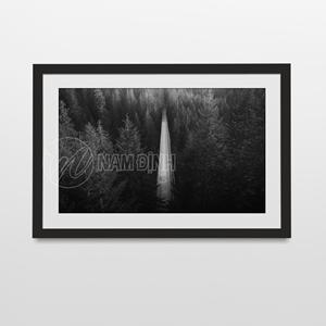 Phong cảnh con đường giữa rừng